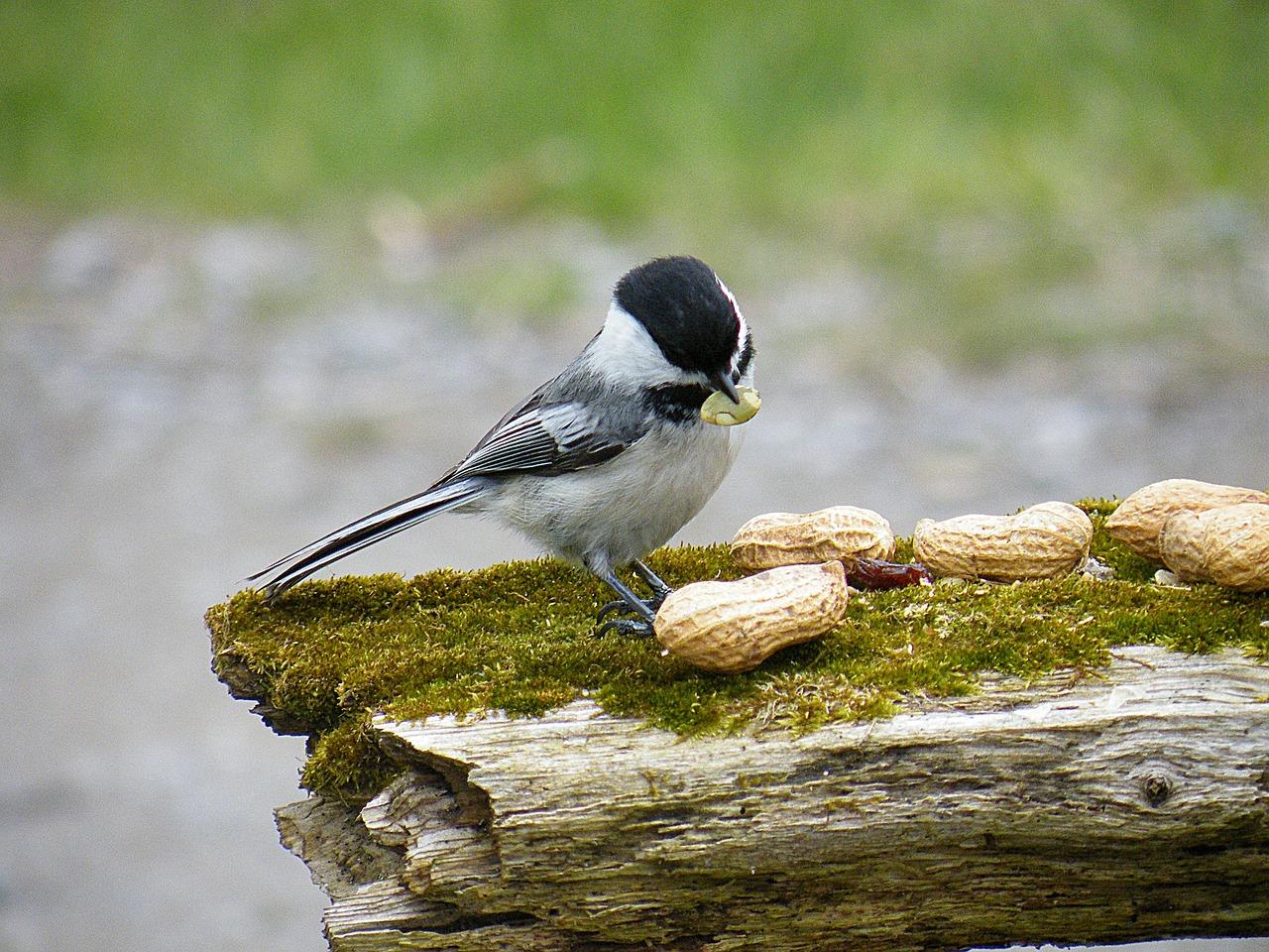 bird-278314_1280