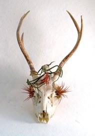 Deer SKull PE 3 crop