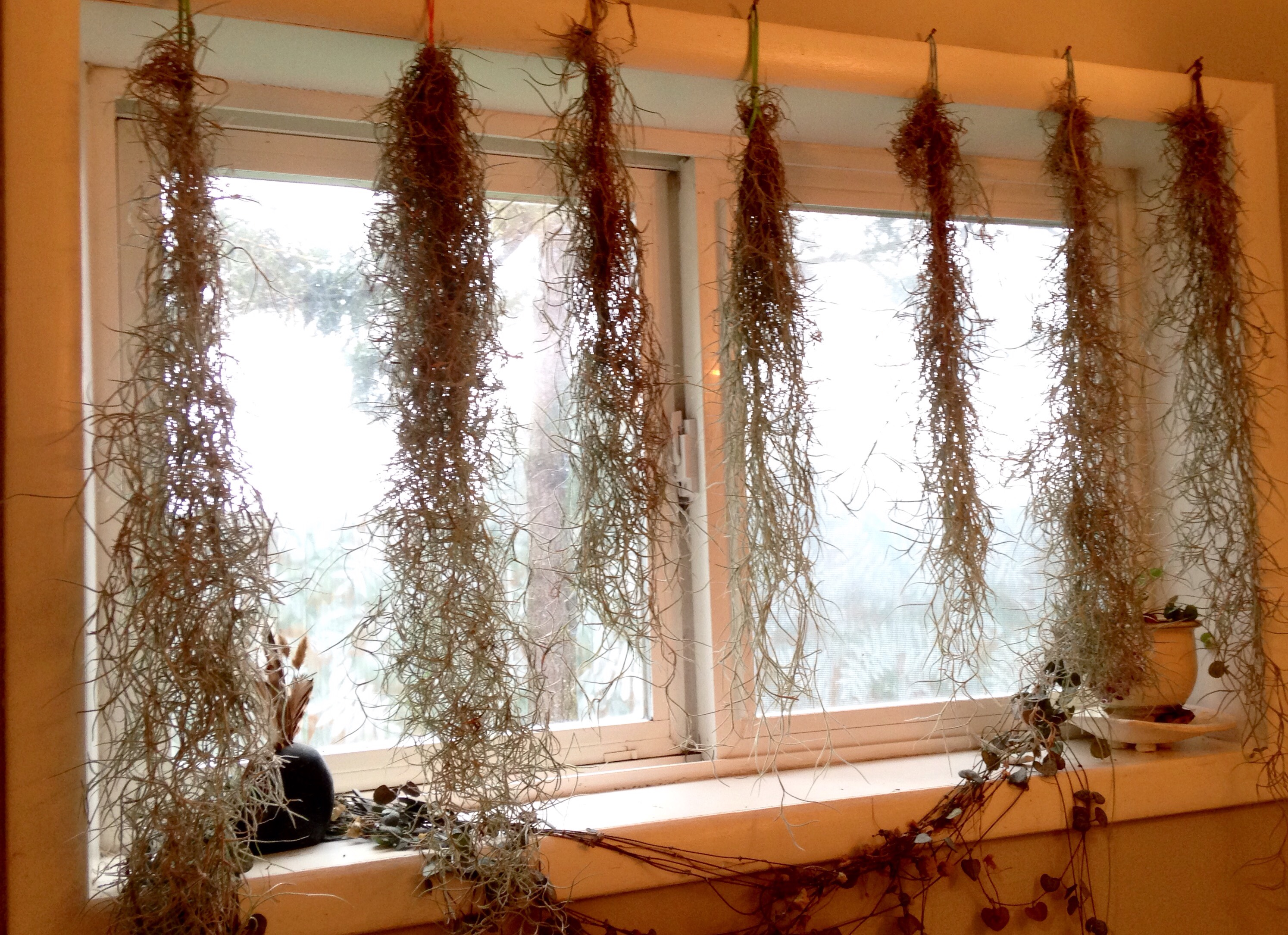 Spanish moss curtain