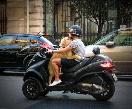 13 Dog on motorcycle in Paris