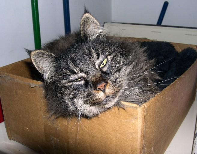Emmy in a box