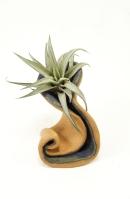 Wave pot1