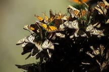 butterflies-807551_1920