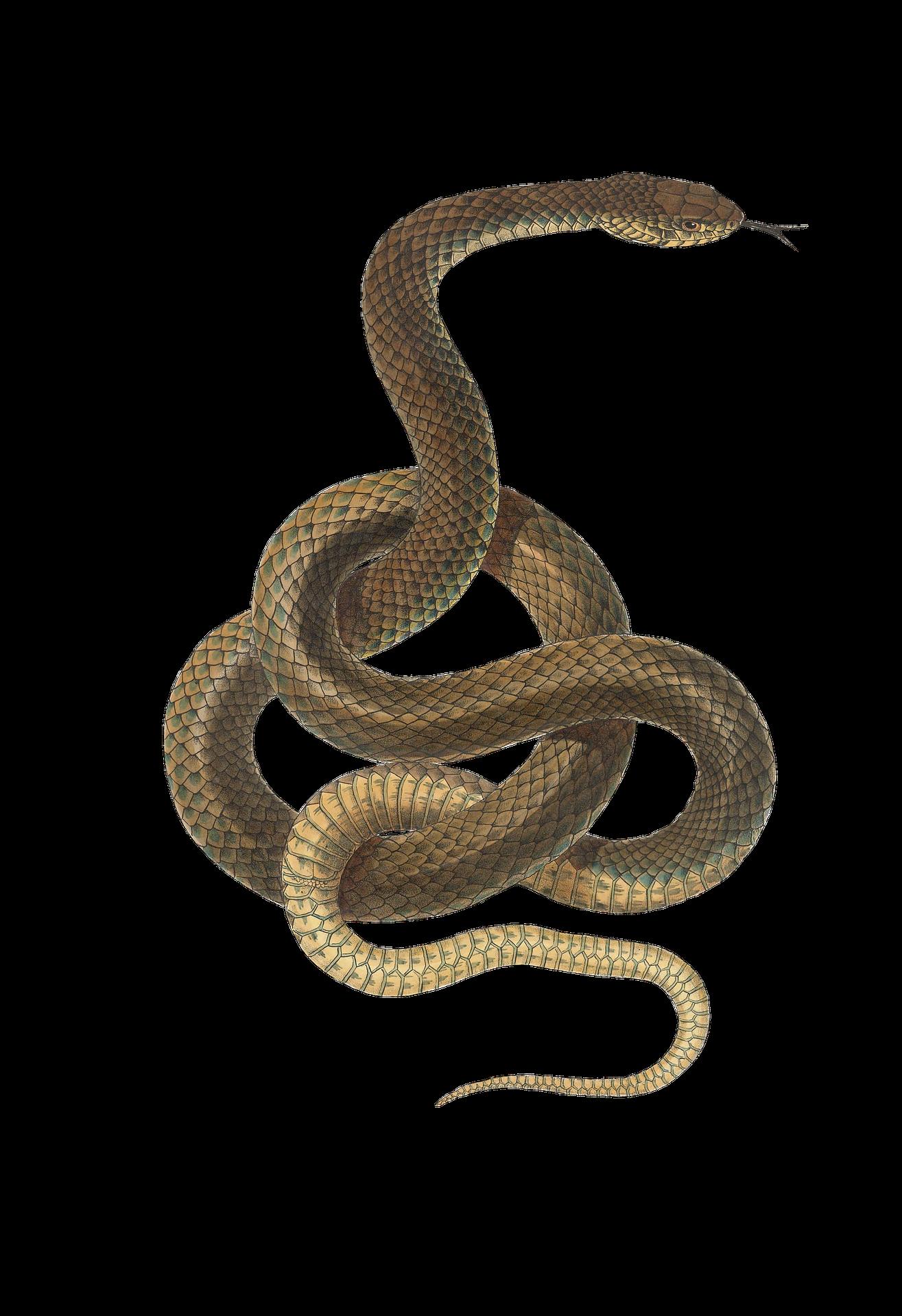 snake-2082037_1920