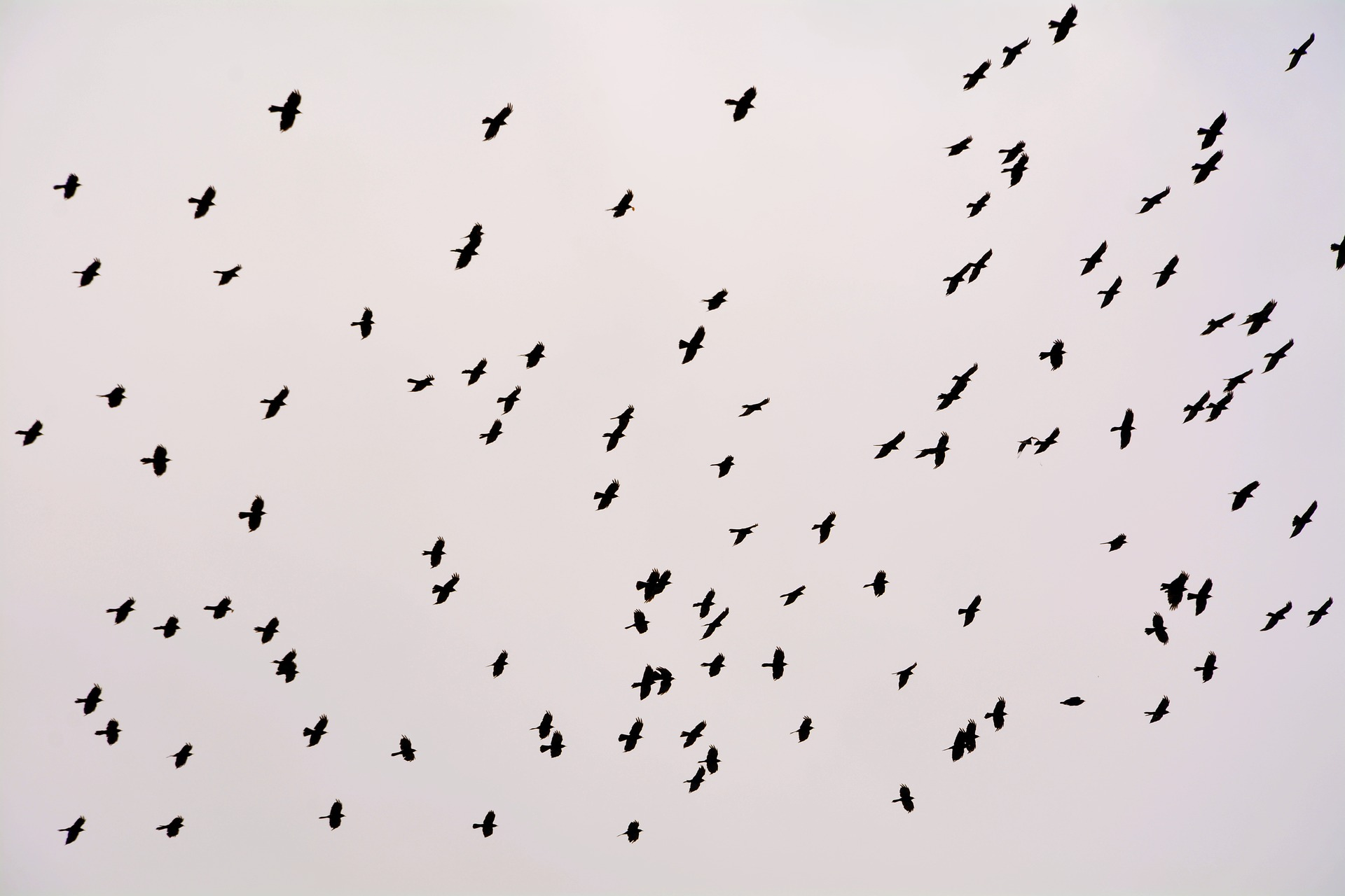 flock-2574265_1920