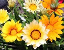 flowers-2766031_1920
