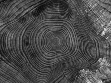 tree-1033614_1920