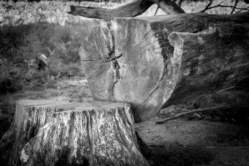tree-1689092_1920