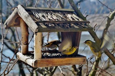 birds-664232_1920