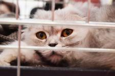 shelter-cat-2754333_1920