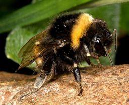 photo courtesy livescience.com