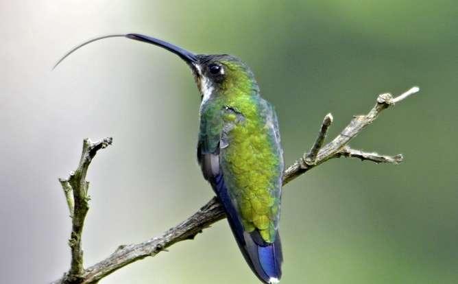 hummingbirdt