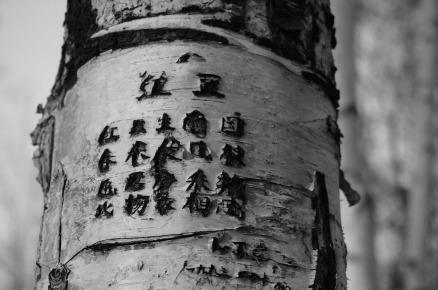 tree-615663_1920